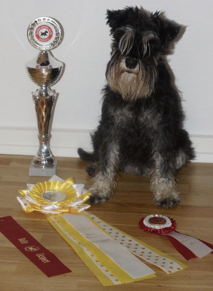 Venga Rally champion 1